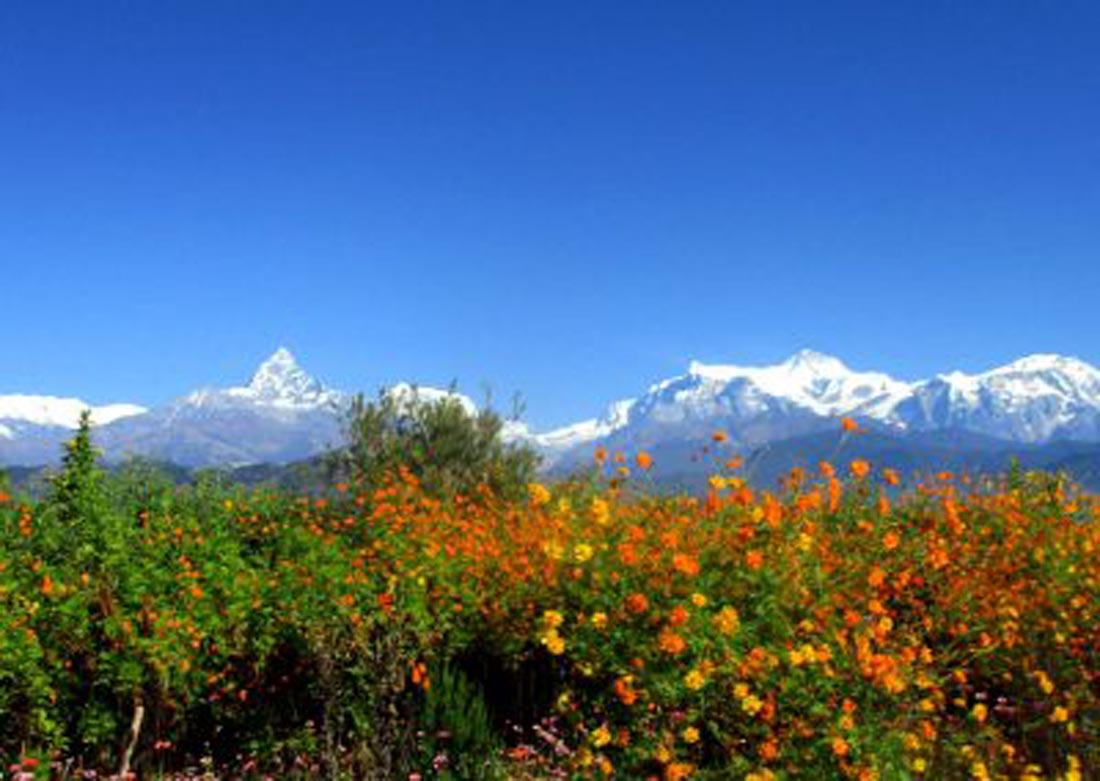 Fistail-mountain-pokhara